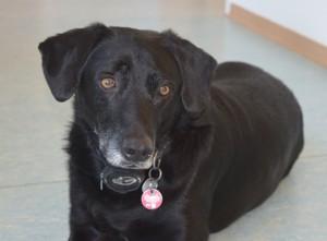 Unser Haushund und langjähriger Wegbegleiter Bennie